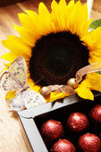 Sunflower, butterfly and chocolate balls — Stock Photo