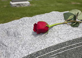 Rose on a Grave — Stock Photo