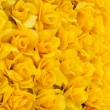 Stock Photo: Yellow rose background