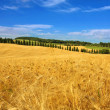 Val D' Orcia Campagna Toscana - Italia — Stock Photo