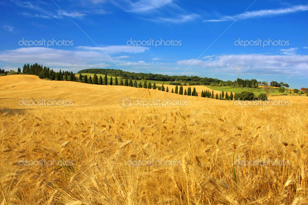 Distesa di grano in Val D' Orcia Campagna Toscana — Stock Photo #6510918
