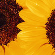 Sunflower - Detail — Stock Photo