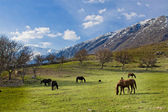 Horses in the mountains — Stock Photo
