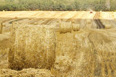 Hay dry skein meadow — Stock Photo