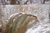 Plants under the snow — Stock Photo