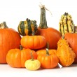 Pumpkins and gourds — Foto de Stock