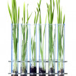 Grass growing in test tubes — Stock Photo