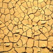 Dried cracked earth — Stock Photo