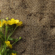 Pretty yellow flowers on burlap — Stock Photo