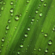 Water drops on leaves — Stock Photo #6622641