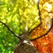 Tree in fall colors — Stock Photo