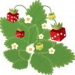 Strawberry with red and green dice, with flowers — Grafika wektorowa