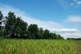 Pola upraw i błękitne niebo — Zdjęcie stockowe
