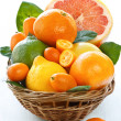 Citrus. — Stock Photo