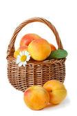 Apricot. — Stock Photo