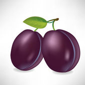 Two plums — Stock Vector