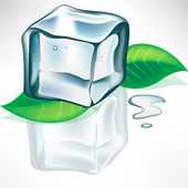 Melting ice cube with mint leaves — Stock Vector