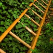 Ladder and ivy - Stock Photo