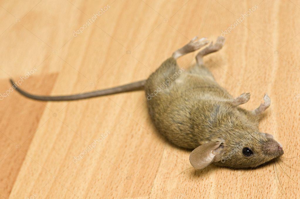 Приснились дохлые мыши