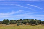 Rural Landscape — Photo