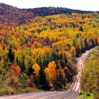 Autumn woods dirt road — Stock Photo