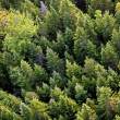 Aerial trees — Stock Photo #6592410