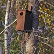 Brown bird house tree woods — Stock Photo