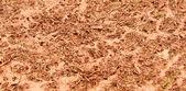 Closeup fangoso césped — Foto de Stock
