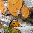 Stock Photo: Winter logging