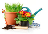 Green grass in the pot with red flowers — Stock Photo