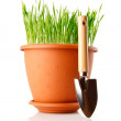 Green grass in the pot with shovel tool - Stock Photo
