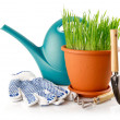 Green grass in the pot with shovel tool and gloves — Stock Photo