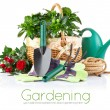 Garden equipment with flowers and green plants — Stock Photo #6590530