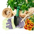 Garden equipment with flowers and green plants - 