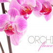 Orchid flowers on branch — Stock Photo