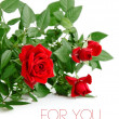 Red rose with green leaves — Stock Photo
