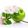 Green apple fruit isolated with pink flowers on branch — Stockfoto