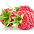 Raspberry berries with green leaf — Stock Photo