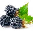 Berry blackberry with green leaf — Stock Photo