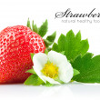 Strawberry berry with green leaf and flower — Stock Photo #6598575