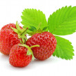 Red strawberry fruits with green leafs isolated — Stock Photo