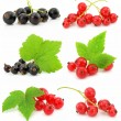 Collection of black and red currant fruits isolated — Stock Photo #6598969