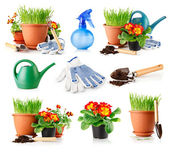 Set garden grass and flowers in the pots — Stock Photo