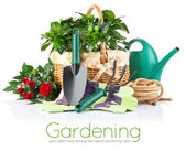 Garden equipment with flowers and green plants — Stock Photo