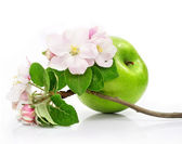 Green apple fruit isolated with pink flowers on branch — Stock Photo