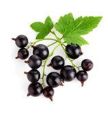 Frutas frescas de groselha com folhas verdes — Foto Stock