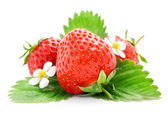 Fresh strawberry fruits with flowers and leaves — Stock Photo