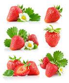 Conjunto fresa baya con hojas verdes y flores — Foto de Stock
