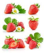 Set strawberry berry with green leaf and flower — ストック写真