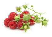 Ripe berries of raspberry with branch — Stock Photo